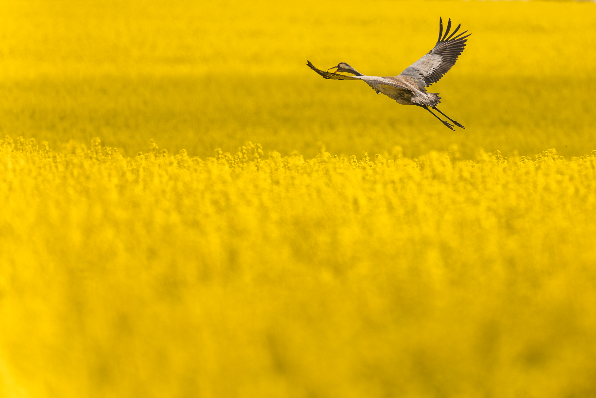 © Robert Sommer
