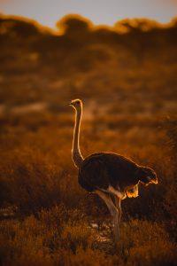 Afrika anders © Kevin Winterhoff