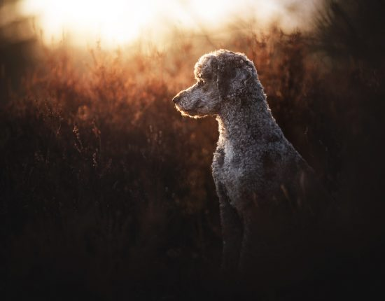 Hundefotografie © Anne Geier