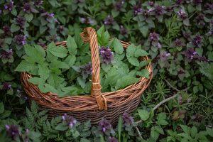 Wildkräuter mit SIGMA © Sylwia Gervais