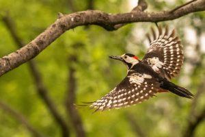 Vogelfotografie in Ungarn © Robert Sommer