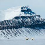 Eisbären © Michael Ginzburg