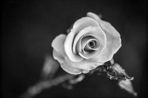 Die Schwarzweißfotografie - mehr als nur eine Notlösung