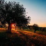 Mit dem SIGMA 500mm F4 DG OS HSM | Art Mallorca entdecken © Kevin Winterhoff