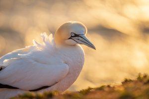 Naturfotografie auf Helgoland mit den SIGMA Teleobjektiven © Robert Sommer