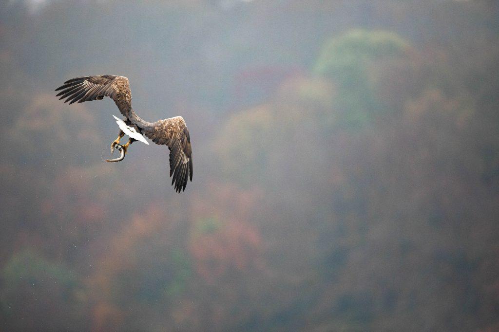 Natur- und Tierfotografie im Naturpark Feldberger Seenlandschaft © Kevin Winterhoff