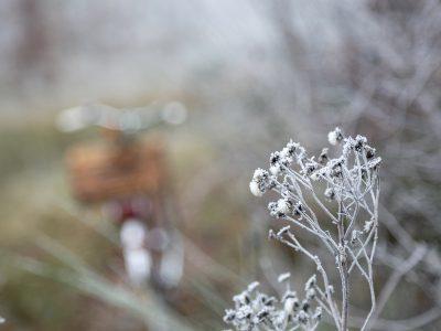 Lichtstarke Objektive für die dunkle Jahreszeit © Syl Gervais