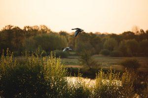 """Naturschutzgebiet """"Steinhorster Becken"""" © Maike Descher"""