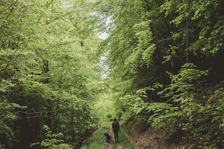 Frühling im Sauerland © Maike Descher