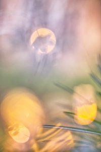 Stay Home… Geht raus zum Fotografieren! © Ines Mondon