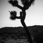 10 Tipps für wirkungsvolle Schwarzweiß-Fotos © Christopher Schmidtke