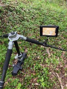 Makrofotografie mit der SIGMA fp und einem Feldmonitor © Mark Ford