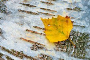 Willkommen im Herbst © Ines Mondon