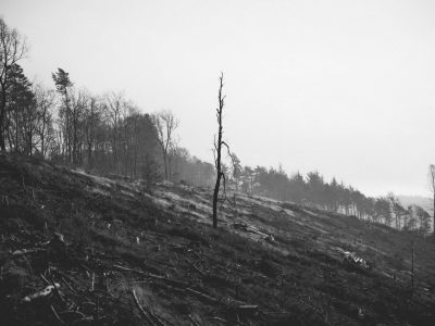 Teutoburger Wald © Maike Descher