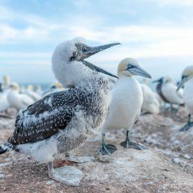 Fünf vermeidbare Fehler von Tierfotografen mit Michael Ginzburg
