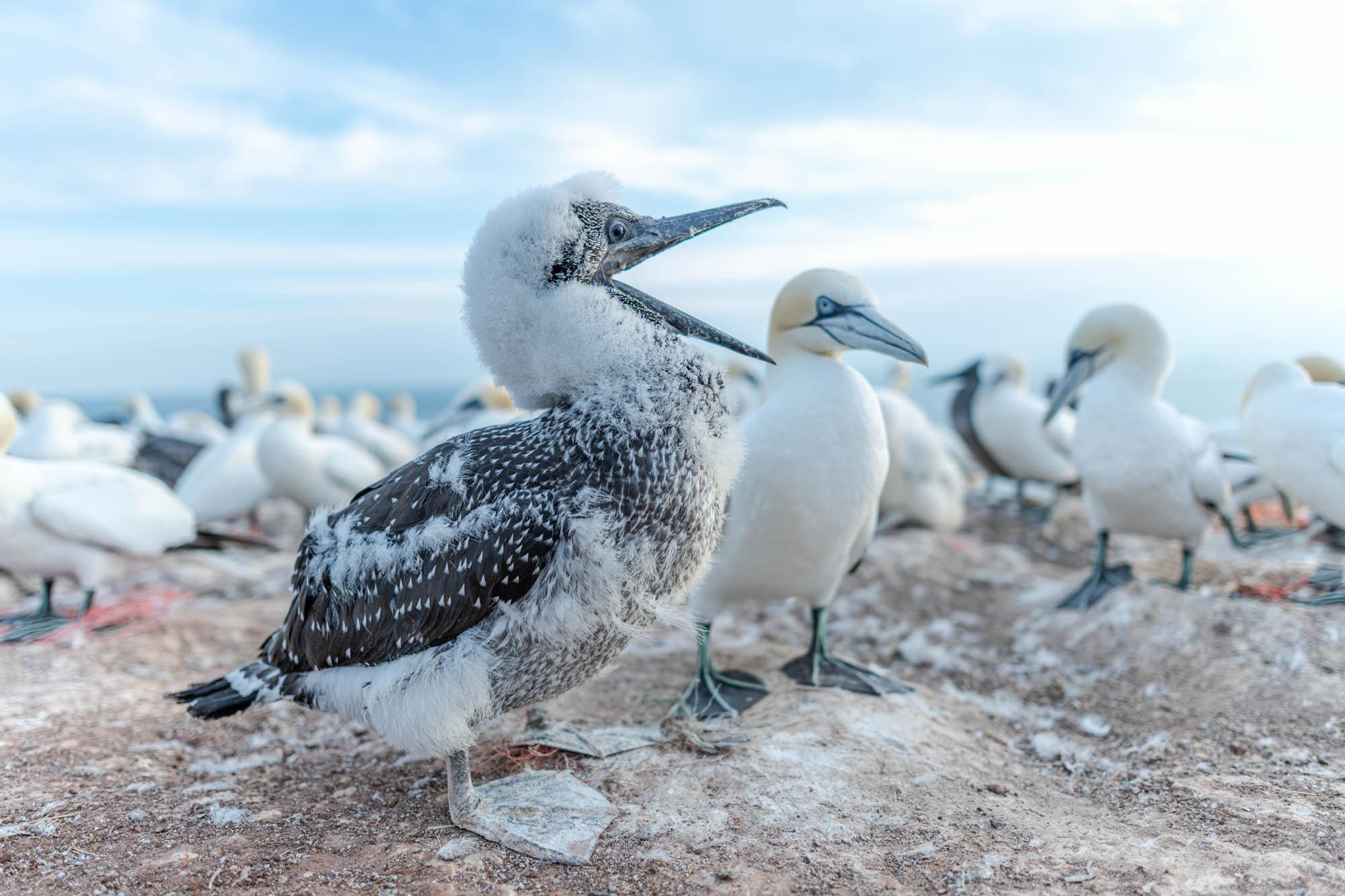 Fehler von Tierfotografen © Michael Ginzburg