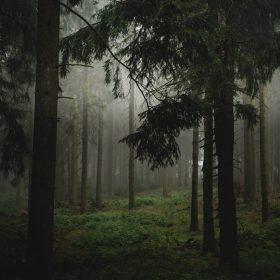 Unterwegs in unseren Wäldern
