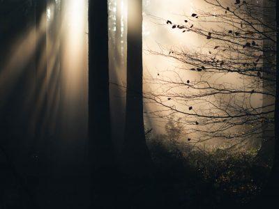 Unterwegs in unseren Wäldern mit Maik Lipp © Maik Lipp