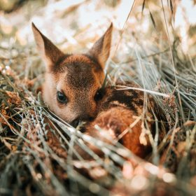 "Kitzretter – ""Bambi"" retten mit der Drohne"
