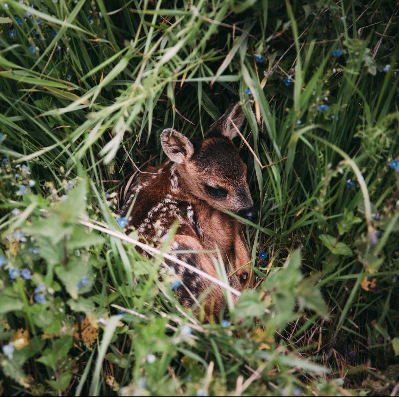 "Kitzretter - ""Bambi"" retten mit der Drohne © Kevin Winterhoff © Pia Jo List"