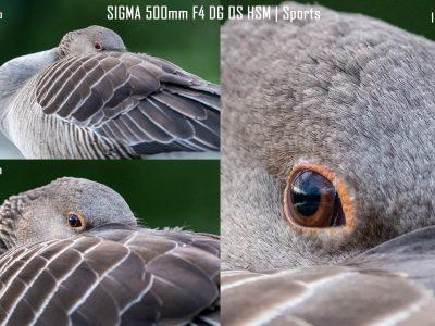 Erfahrungsbericht über die neue SIGMA fp L von Robert Sommer © Robert Sommer