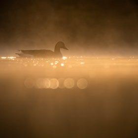 Tierfotografie mit dem SIGMA 100-400mm F5-6,3 DG DN OS | Contemporary