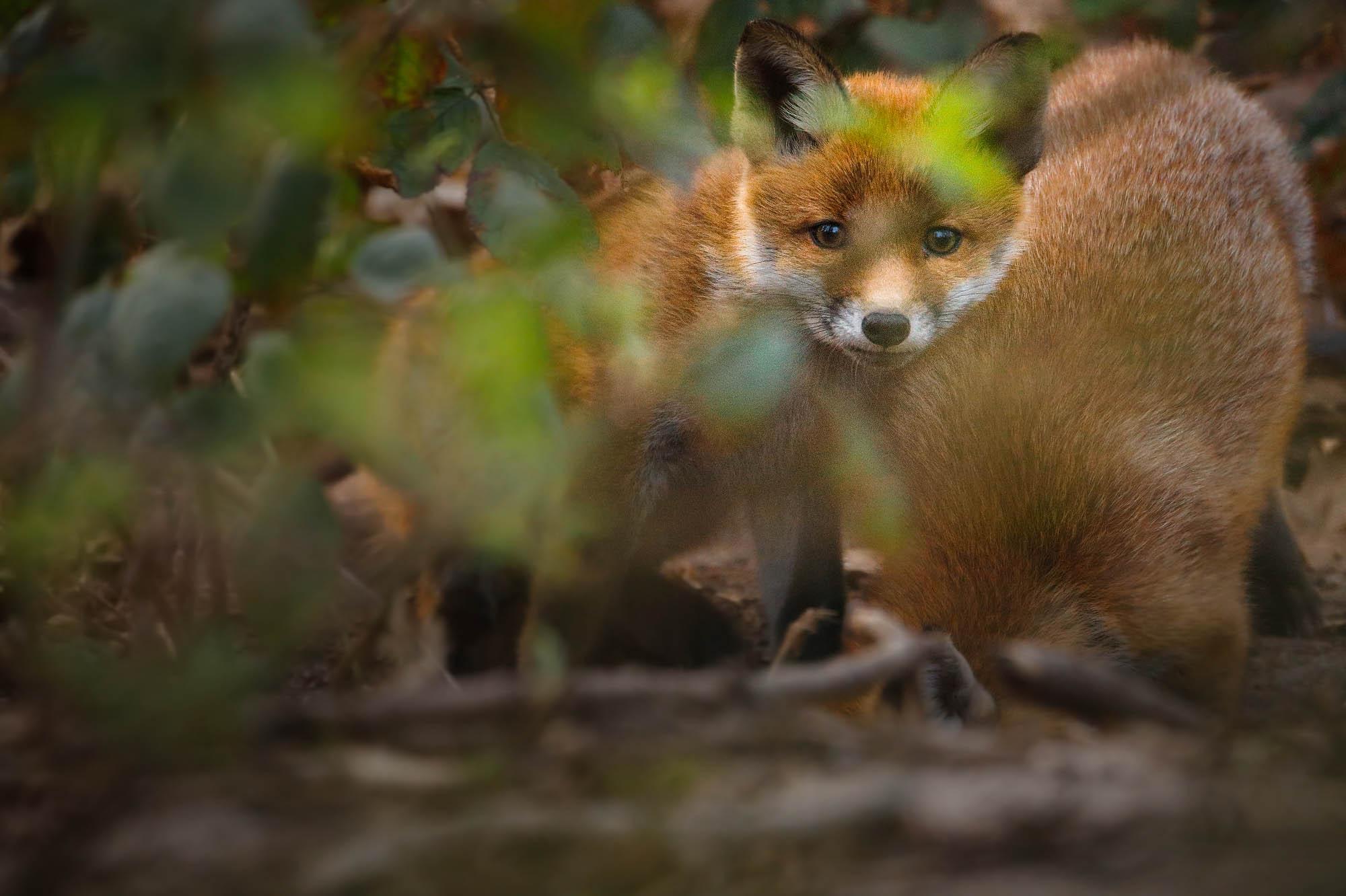 Zuckerschock im Wald und Wiese mit Kevin Winterhoff © Kevin Winterhoff
