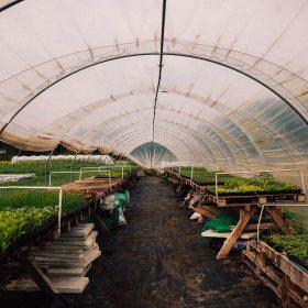Regenerative Landwirtschaft auf dem Gut Haidehof