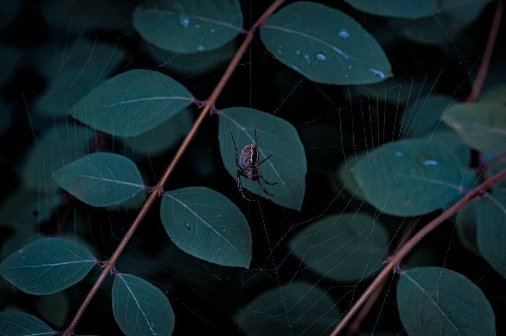 Makrofotografie mit der SIGMA fp L und dem 105mm DG DN MACRO | Art © Marius Wenzel
