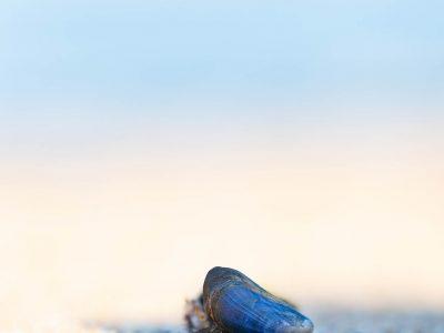 """""""Herbsttag"""", ein Rilke Gedicht © Ines Mondon"""