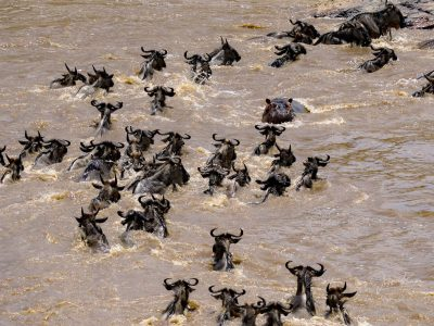Die Maasai Mara enttäuscht nie! © Johnny Krüger